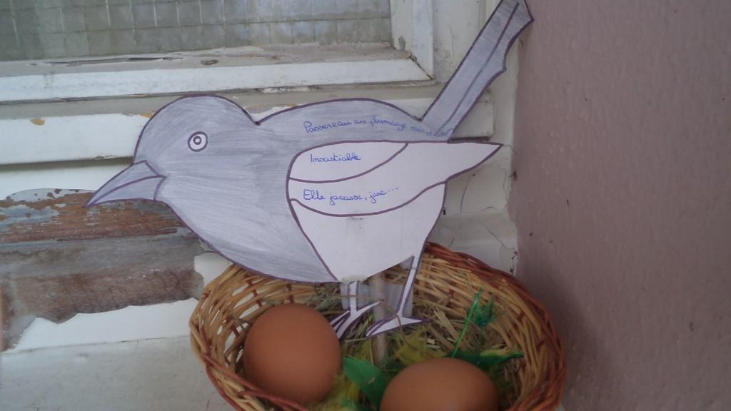 oiseaux (3)