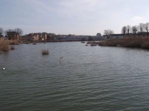 étang (3)