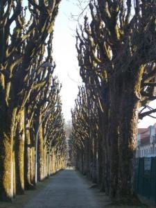 promenade (9)